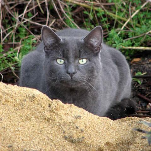 Auld Grey Cat Image