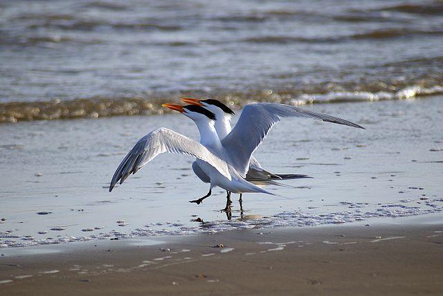 Beach Dancer Image
