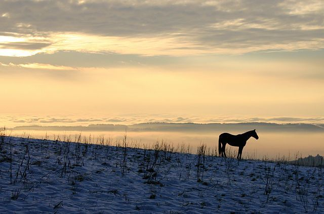 Black Horse Image