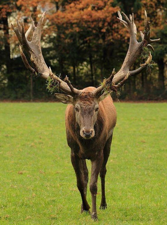 Deer's Antlers Image