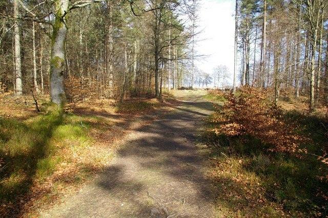 Caddam Wood Image