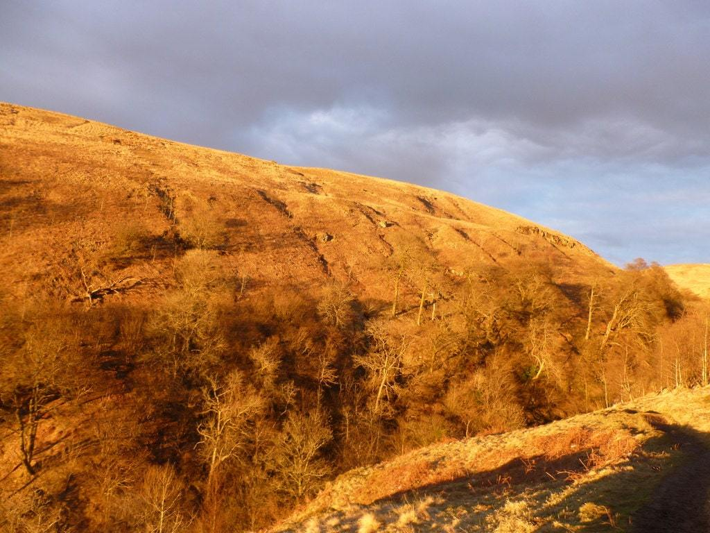 The setting sun was casting a remarkable glow on the hillside above the Campsie Glen