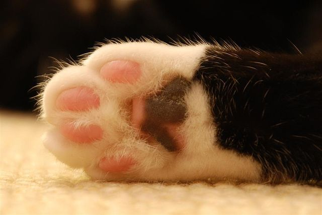 Cats Paw Image