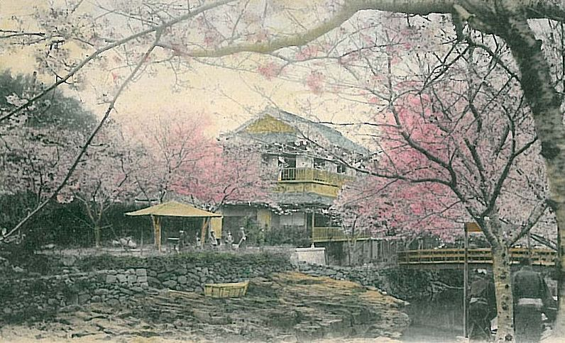 Cherry blossom in similar setting for Madama Butterfly