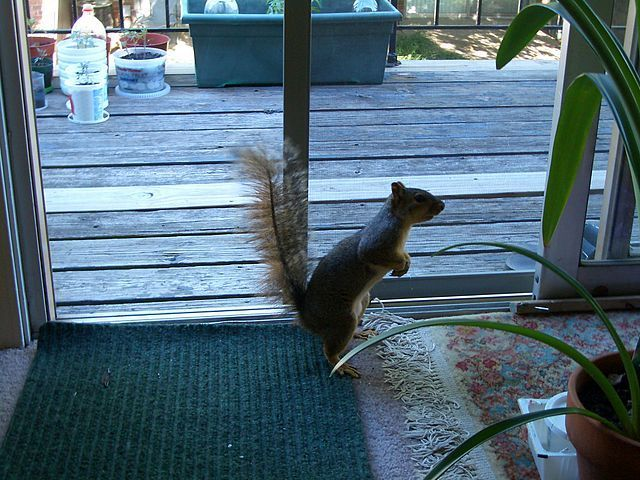City Squirrel Image