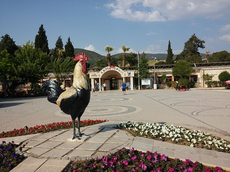 Cocks Of Denizli Image