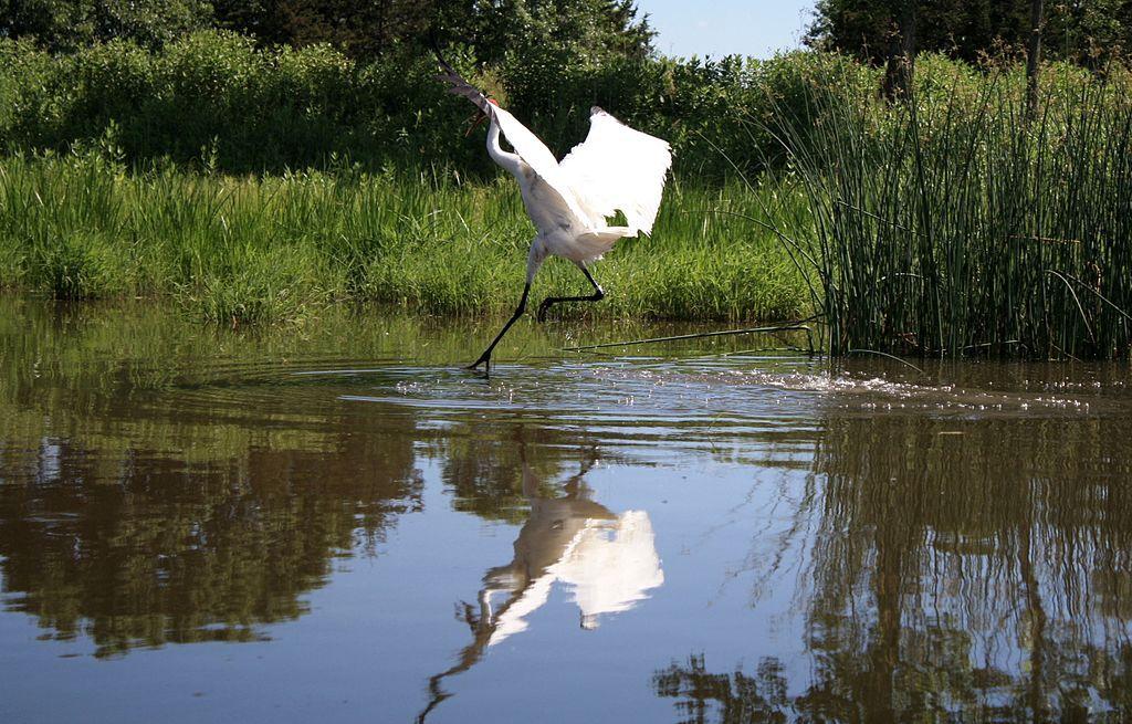 Dancing On Water Image