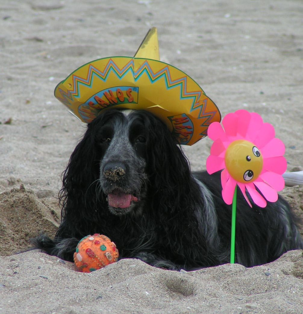 Dog in heaven, enjoys being at the beach