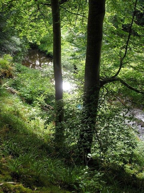 Ellwyn's Fairy Glen Image