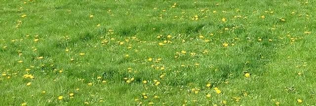 A Fairy Ring Image