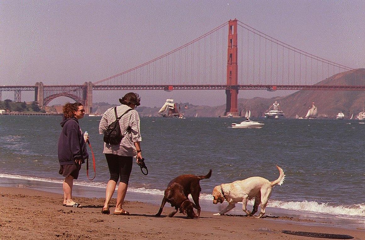 Frolic in San Francisco