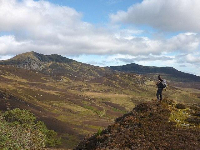 Highland Rambler Image