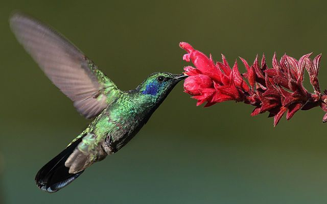 Humming Bird Image