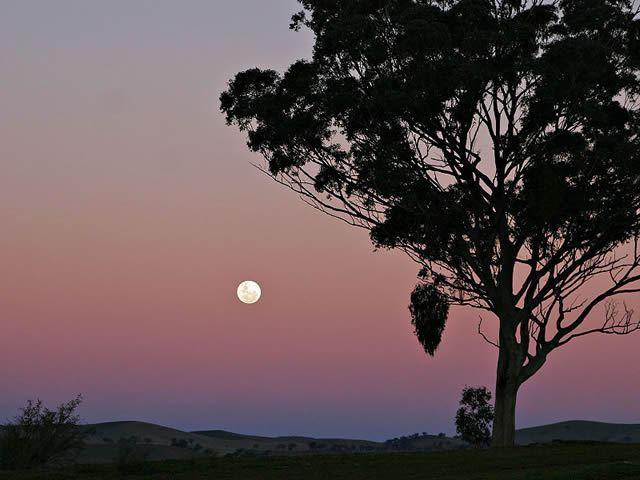 Hunter's Moon Image