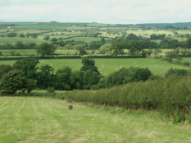 View Over Lyne Valley Image