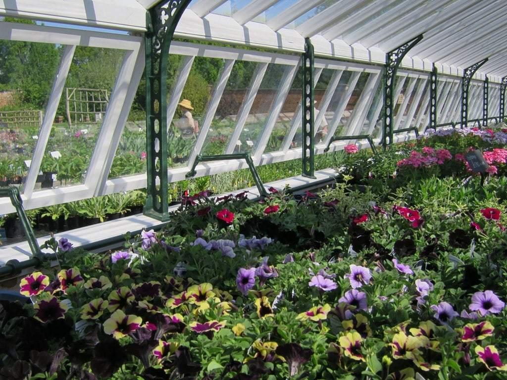 Plant Nursery Image
