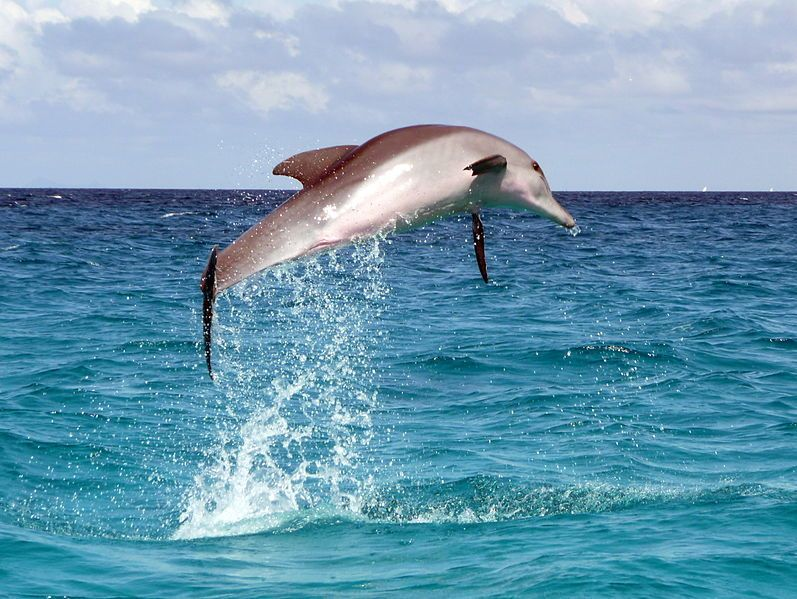 Ocean Frolic Image