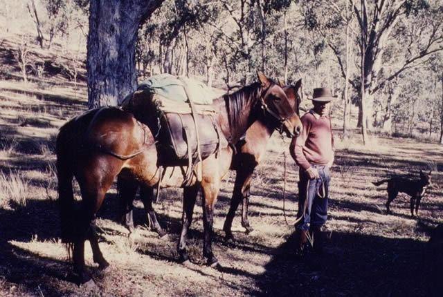 A Packhorse Image