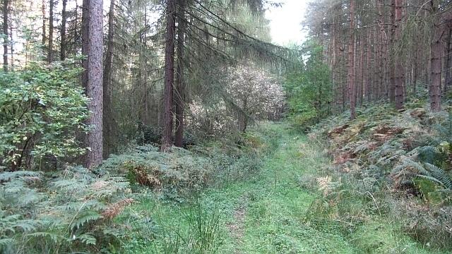 Pinewoods Image