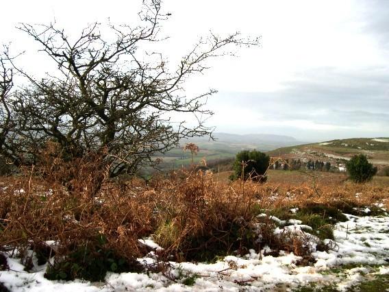 Quantock Hills Image