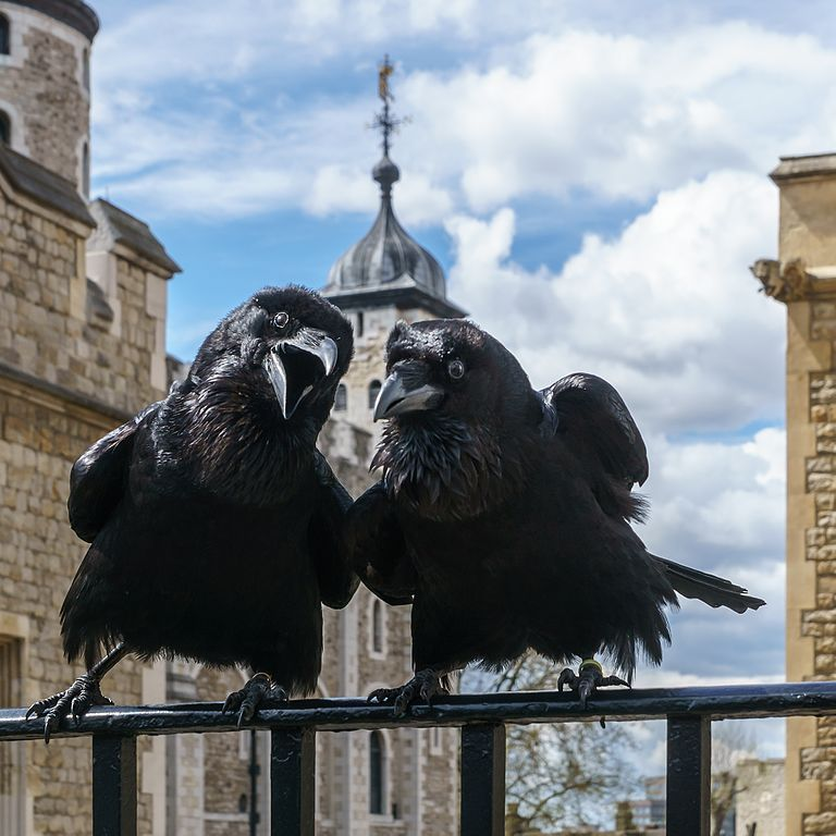 Two Ravens Image