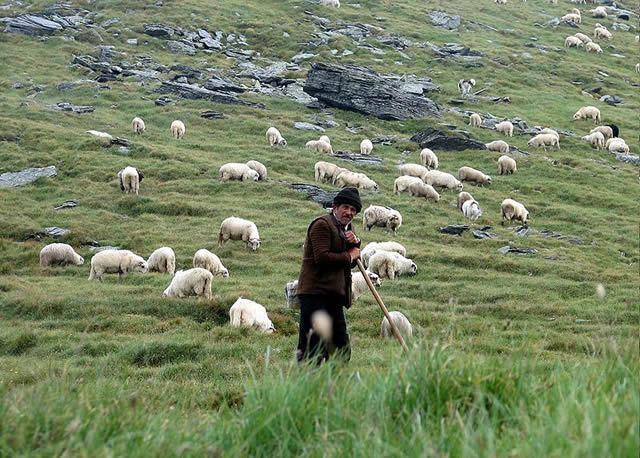 Shepherd's Crook Image