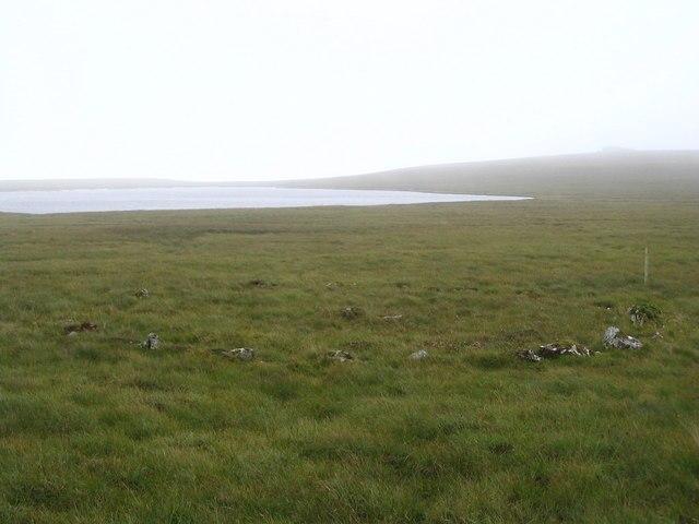Shetland Fiddler Image