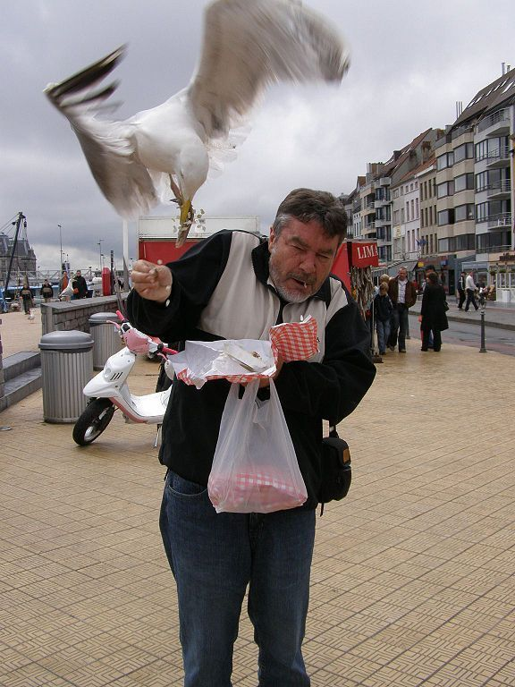 Shoplifting Seagull Image