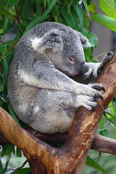 Sleeping In Image