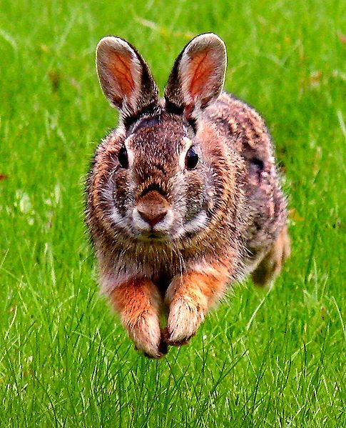 Startled Rabbit