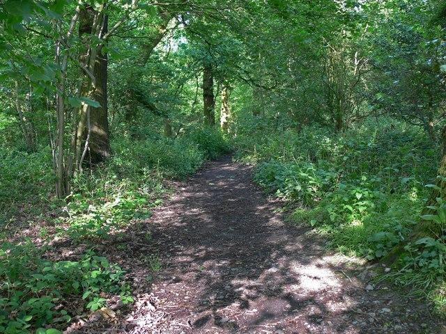 Swithland Woods Image