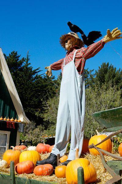 A Tattie Bogle Scarecrow Image