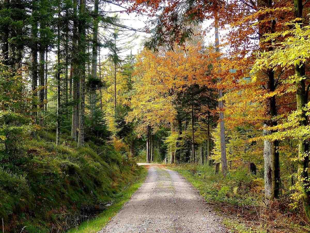 Black Forest road