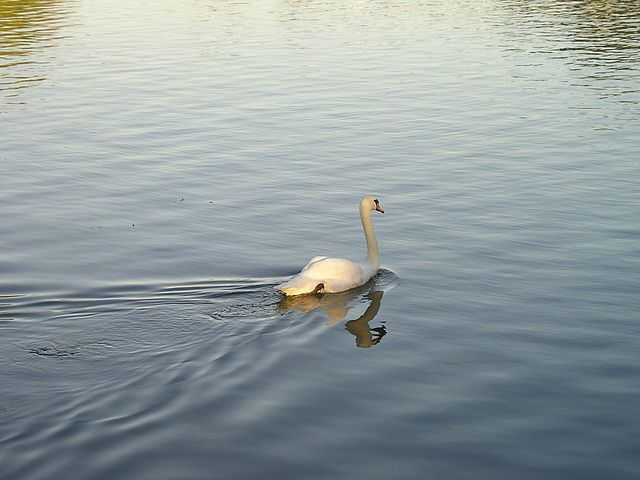 The Trail Of The Swan Image