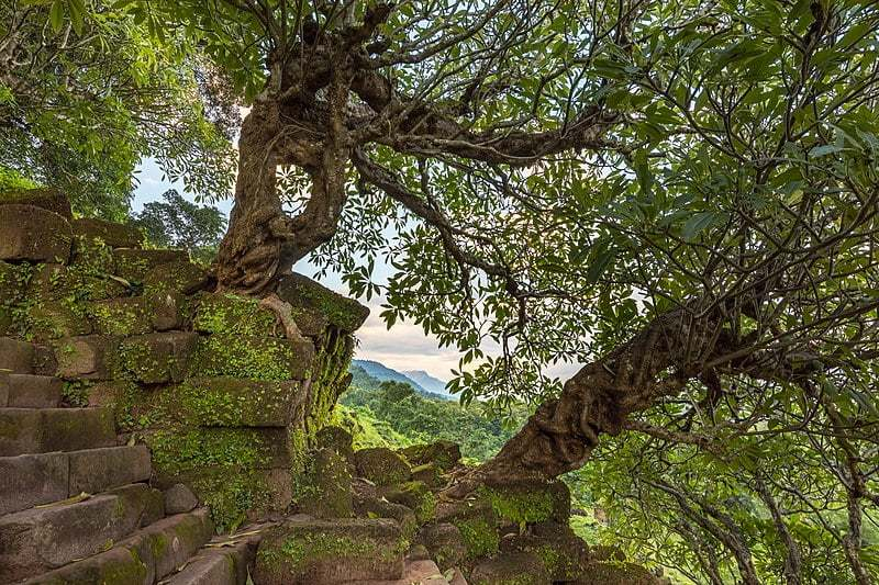 Twisted tree trunk overgrowing temple steps