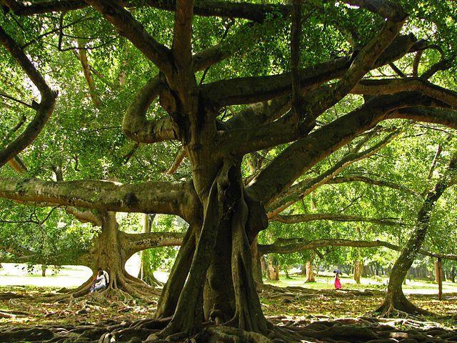 Under A Shady Tree Image