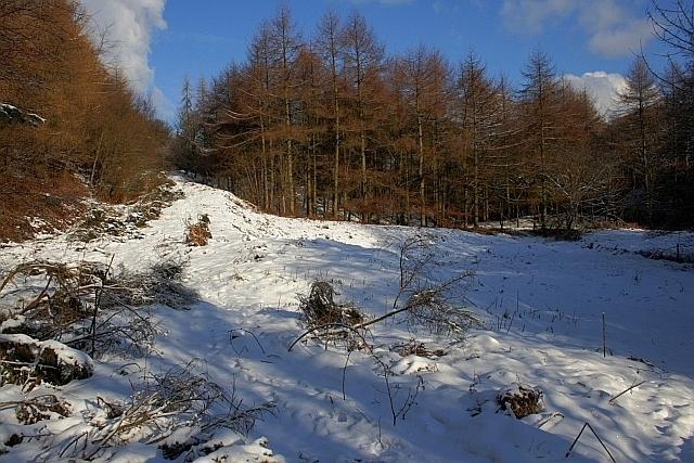 Wileycat Wood