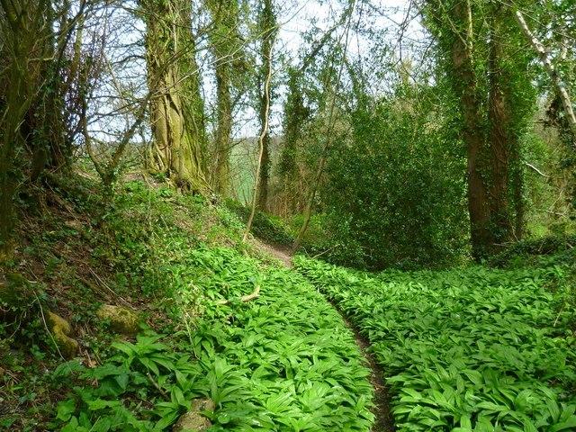Wiltshire Walk Image