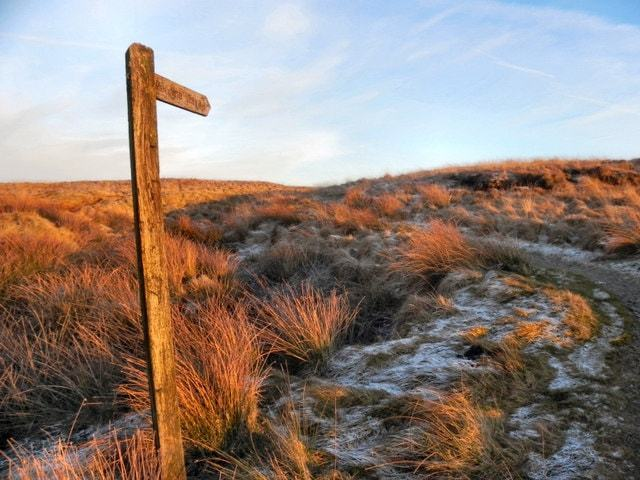 Windswept Moors Image