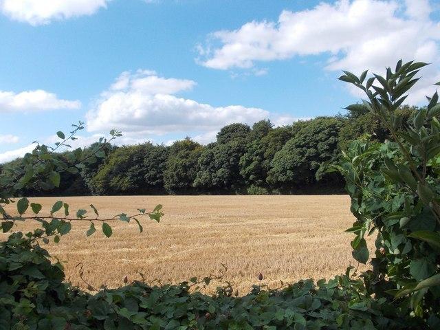 Woodland Way Image