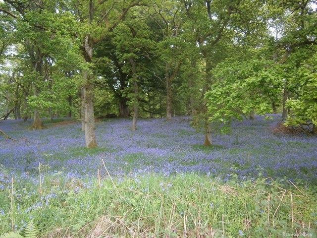 Scottish Woodland